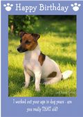 "Jack Russell Terrier-Happy Birthday - ""Are You Really THAT Old"" Theme"